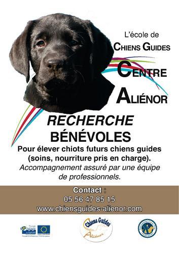 Merignac chien guides aveugles