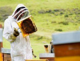 L'apiculture est un sport de combat