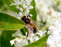 L'hiver, le temps de la formation pour les apiculteurs