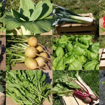 Soutien au maraichage BIO : pour une agriculture durable, locale.